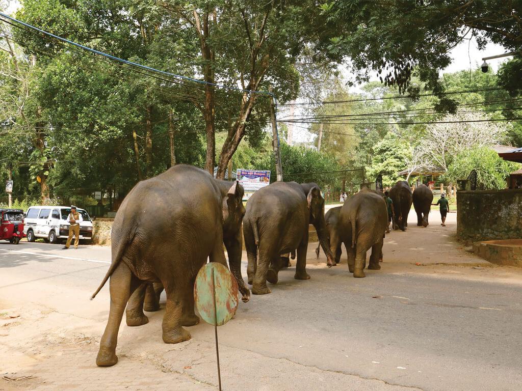 ピンナワラ(象の孤児院)