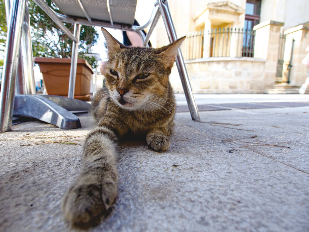 マルタ ヴァレッタ 猫