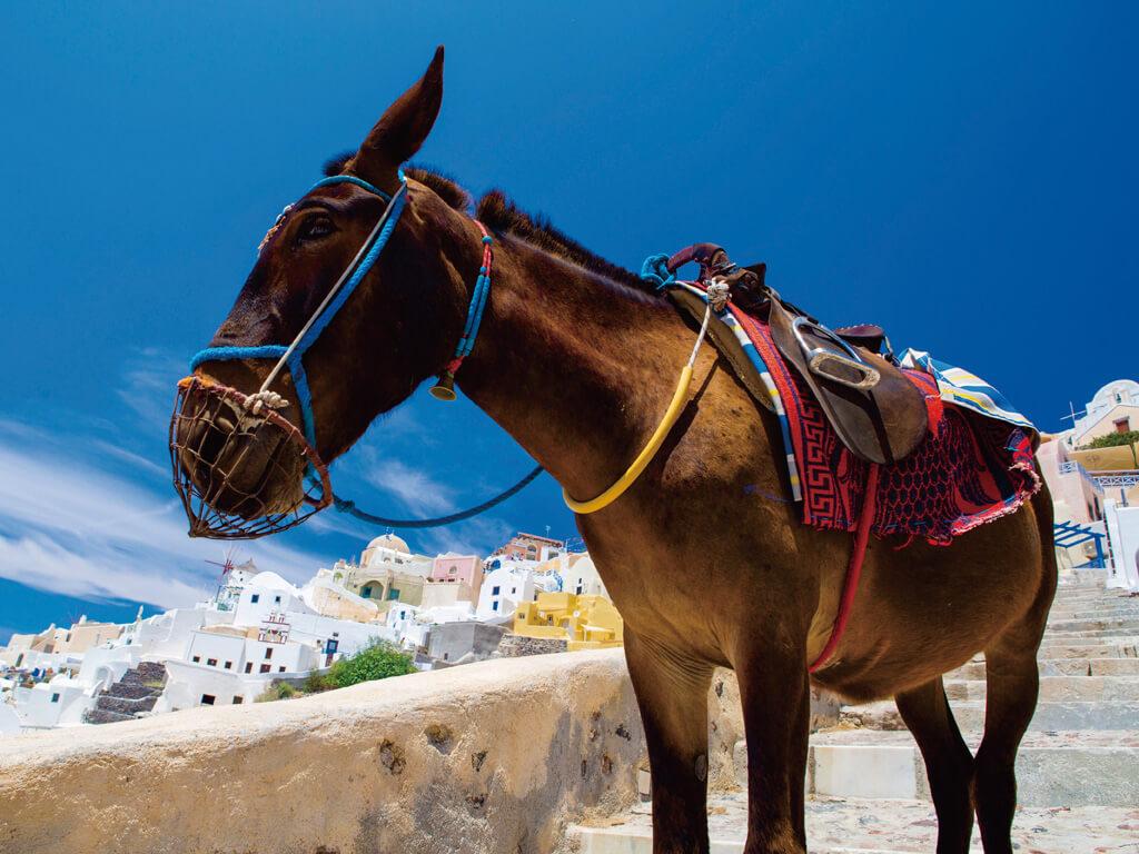 サントリーニ島 ロバ ロバのタクシー ドンキー ギリシャ