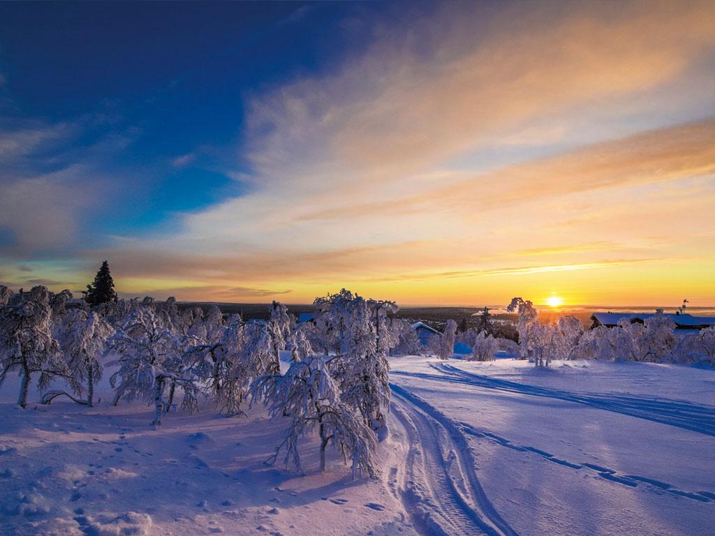 フィニッシュ・ラップフンド 犬 ランプランド地方 フィンランド