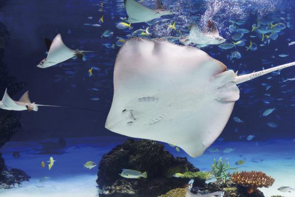 サンシャイ水族館